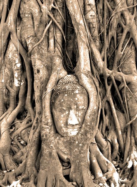 004 The Buddha Tree (Ayutthaya, Thailand)