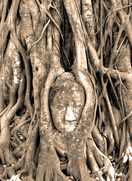 004 The Buddha Tree (Ayutthaya, Thailand)