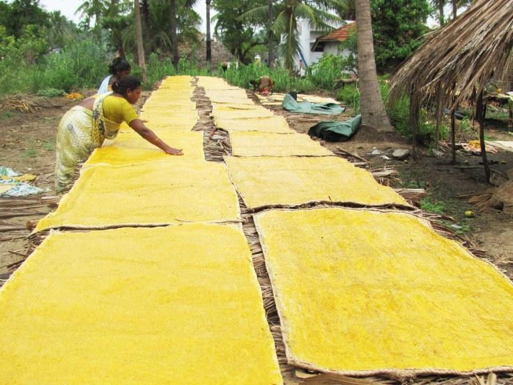 006 Mango Delight (East Godavari, Andhra Pradesh, India)