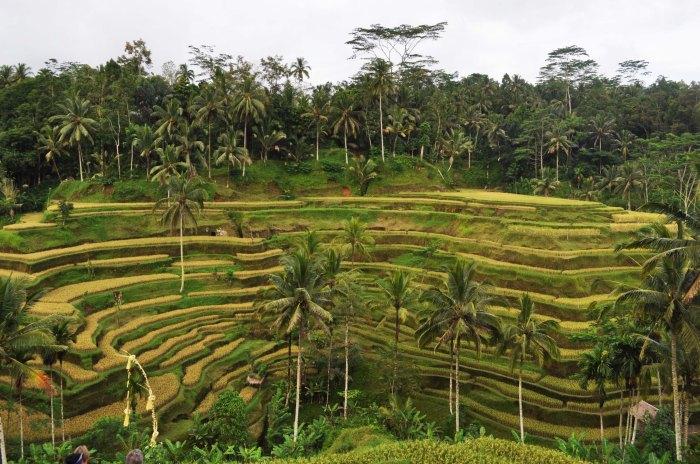 017 Terraces of Life (Ubud, Bali, Indonesia)