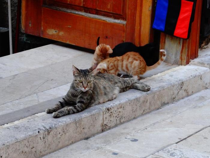 024 The Feline Fascination (Antalya, Turkey)