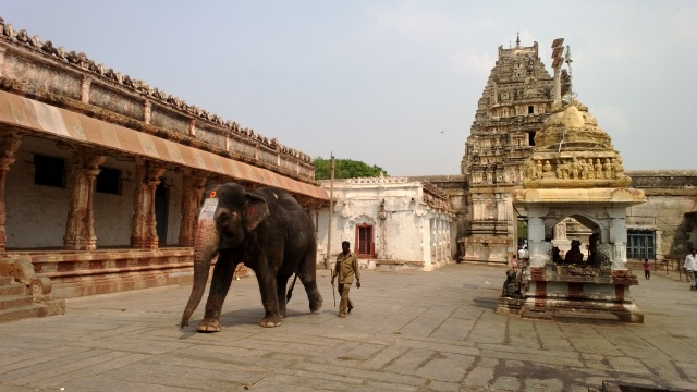 025 The Holy Elephant (Hampi, Karnataka, India)